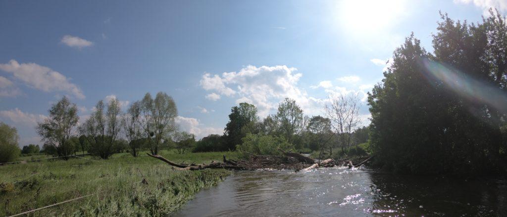 Totholz auf der Alme Hochwasser 2019 - Route